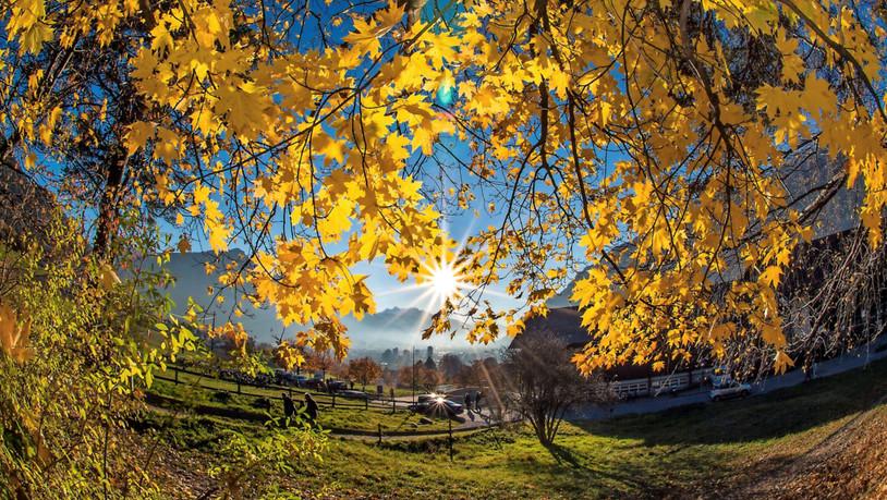 Herbst Wetter Wald Blätter Sonne