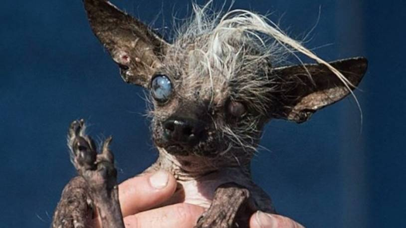 Ugliest Dog Pictures