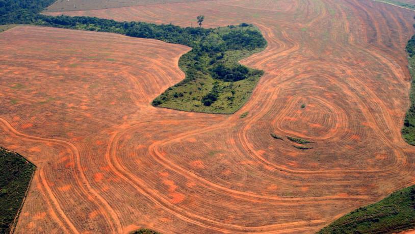 Die Abholzug des Regenwaldes in Brasilien hat seit dem Amtsantritt von Präsident Jair Bolsonaro weiter zugenommen. (Symbolbild)