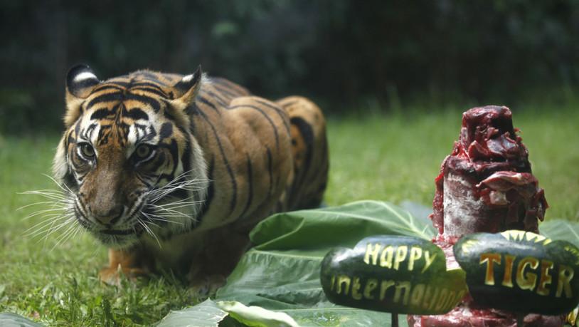 Tiger Ausgestorben
