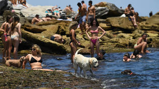 A dog cools off in the water during heatwave conditions at Bondi Beach in Sydney, Saturday, November 28, 2020. (AAP Image/Joel Carrett) NO ARCHIVING